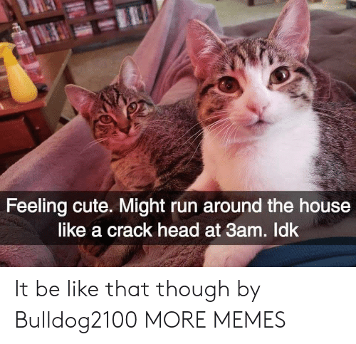 Be Like, Cute, and Dank: Feeling cute. Might run around the house  like a crack head at 3am. Idk It be like that though by Bulldog2100 MORE MEMES