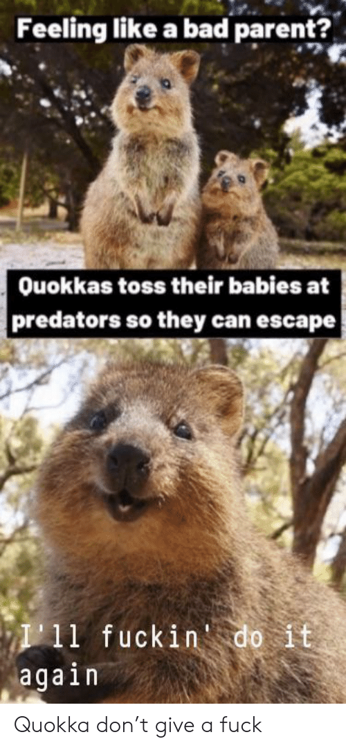 A Fuck: Feeling like a bad parent?  Ouokkas toss their babies at  predators so they can escape  I11 fuckin do it  again Quokka don't give a fuck
