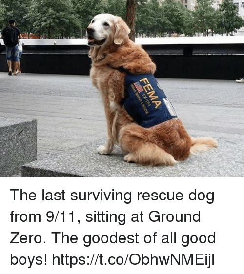 9/11, Memes, and Zero: FEMA The last surviving rescue dog from 9/11, sitting at Ground Zero. The goodest of all good boys! https://t.co/ObhwNMEijl