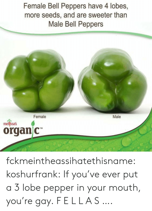 peppers: Female Bell Peppers have 4 lobes,  more seeds, and are sweeter than  Male Bell Peppers  Female  Male  mellssas  organ C fckmeintheassihatethisname: koshurfrank: If you've ever put a 3 lobe pepper in your mouth, you're gay. F E L L A S ….