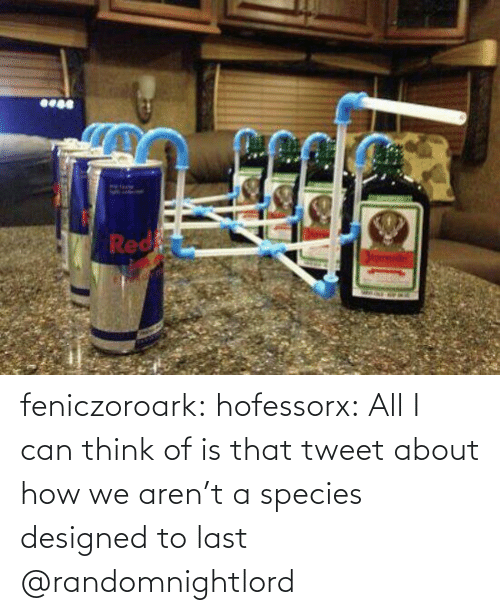 species: feniczoroark:  hofessorx:  All I can think of is that tweet about how we aren't a species designed to last    @randomnightlord