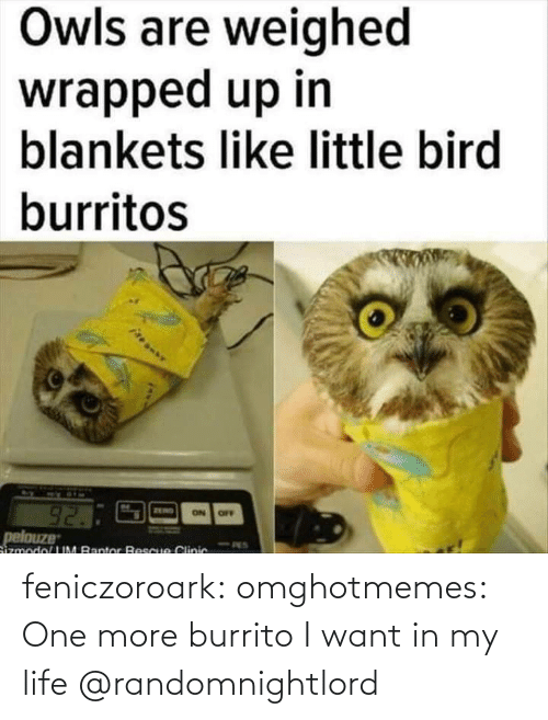 One More: feniczoroark:  omghotmemes:  One more burrito I want in my life   @randomnightlord