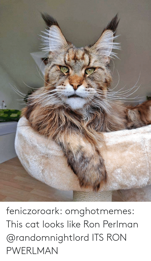 tumblr: feniczoroark:  omghotmemes:  This cat looks like Ron Perlman   @randomnightlord    ITS RON PWERLMAN