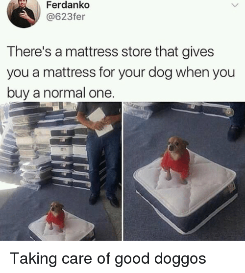 Good, Mattress, and Dog: Ferdankd  @623fer  There's a mattress store that gives  you a mattress for your dog when you  buy a normal one Taking care of good doggos
