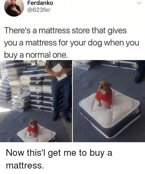 Dank, Mattress, and 🤖: Ferdanko  @623fer  There's a mattress store that gives  you a mattress for your dog when you  buy a normal one. Now this'l get me to buy a mattress.