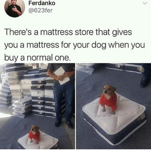 Dank, Mattress, and 🤖: Ferdanko  @623fer  There's a mattress store that gives  you a mattress for your dog when you  buy a normal one