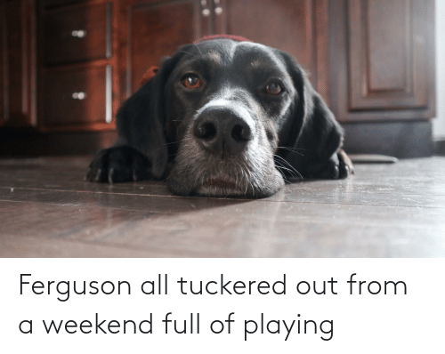 Ferguson: Ferguson all tuckered out from a weekend full of playing