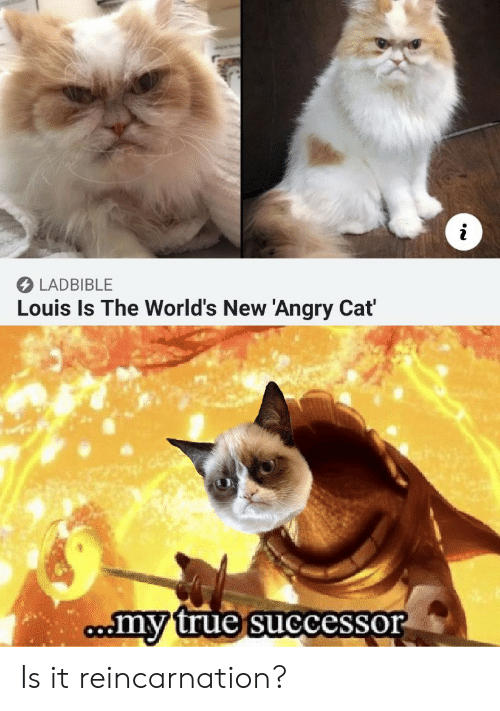 True, Angry, and Reincarnation: fi  LADBIBLE  Louis Is The World's New 'Angry Cat  my true successor  oo Is it reincarnation?