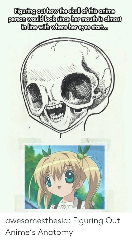 animes: Figuring out how the skull of this anime  person would look since her moufth is almost  in line with where her eyes start.c. awesomesthesia:  Figuring Out Anime's Anatomy