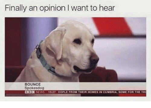 Finals, Memes, and News: Finally an opinion I want to hear  BOUNCE  Spokesdog  BBC  NEWS  15:27 EOPLE FROM THEIR HOMES IN CUMBRIA, SOME FOR THE THI