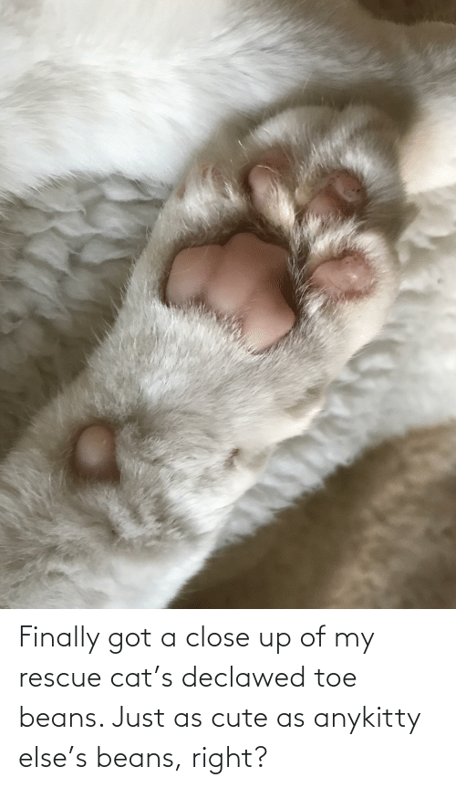 beans: Finally got a close up of my rescue cat's declawed toe beans. Just as cute as anykitty else's beans, right?