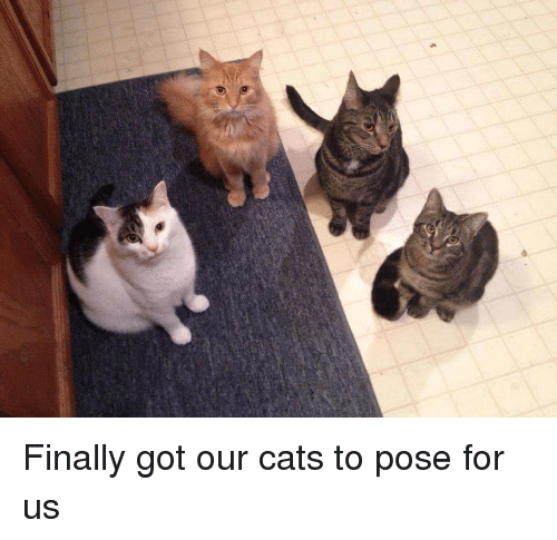 Cats, Got, and The Usual Suspects: Finally got our cats to pose for us