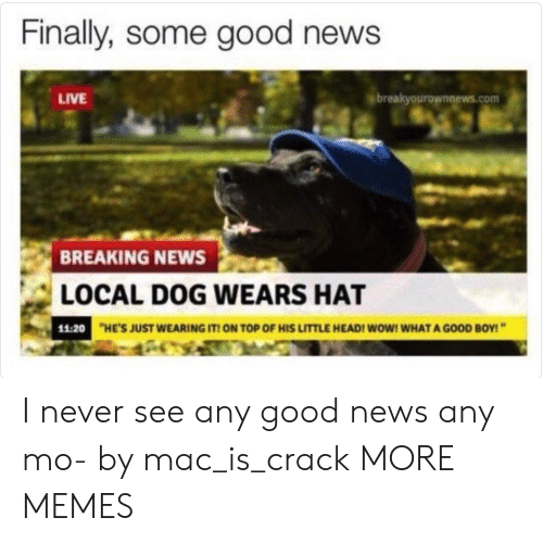 Locale: Finally, some good news  LIVE  breakyourownnews.com  BREAKING NEWS  LOCAL DOG WEARS HAT  11:20  HE'S JUST WEARING IT ON TOP OF HIS LITTLE HEADI WOW! WHAT A GOOD BOY! I never see any good news any mo- by mac_is_crack MORE MEMES
