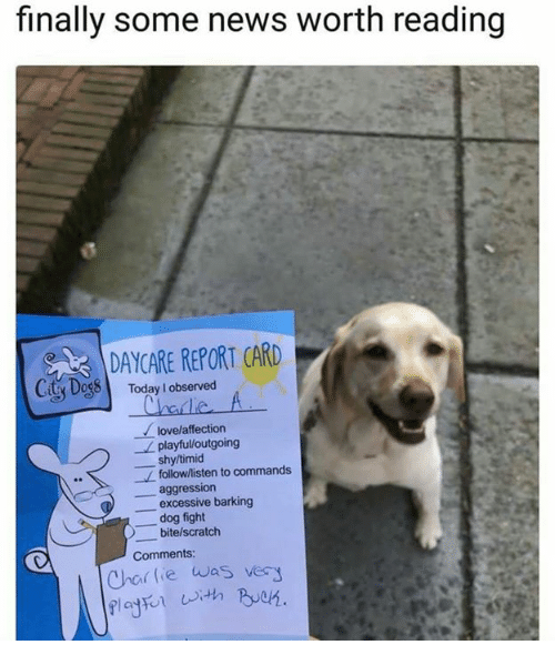 Dogs, Love, and News: finally some news worth reading  DAYCARE REPORT CARD  y DogS Today l observed  love/affection  playful/outgoing  shy/timid  follow/listen to commands  aggression  excessive barking  dog fight  bite/scratch  Comments:  as very