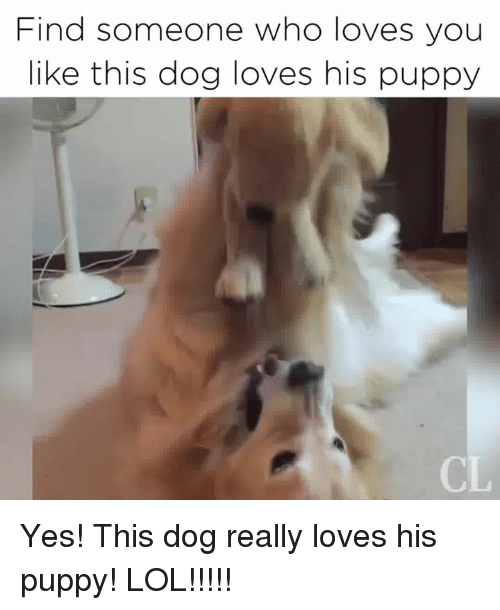 Lol, Memes, and Puppy: Find someone who loves you  like this dog loves his puppy Yes! This dog really loves his puppy! LOL!!!!!