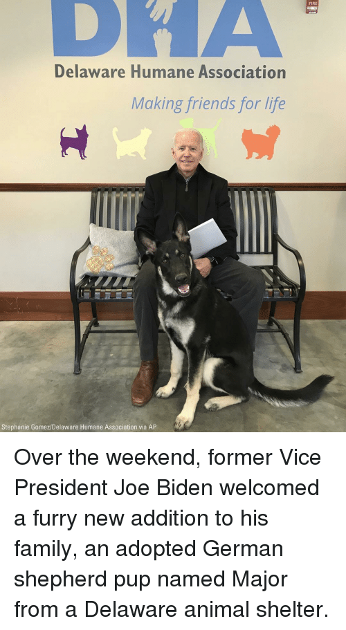Joe Biden: FIRE  Delaware Humane Association  Making friends for life  Stephanie Gomez/Delaware Humane Association via AP Over the weekend, former Vice President Joe Biden welcomed a furry new addition to his family, an adopted German shepherd pup named Major from a Delaware animal shelter.