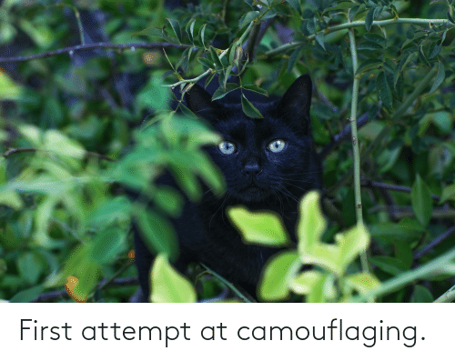 Aww Memes: First attempt at camouflaging.