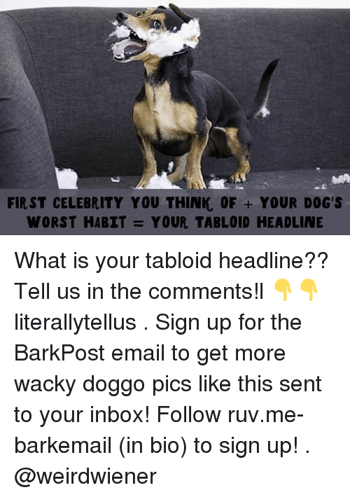 tabloid: FIRST CELEBRITY YOU THINK, OF YOUR DOG'S  WORST HABIT  YOUR TABLOID HEADLINE What is your tabloid headline?? Tell us in the comments!l 👇👇 literallytellus . Sign up for the BarkPost email to get more wacky doggo pics like this sent to your inbox! Follow ruv.me-barkemail (in bio) to sign up! . @weirdwiener