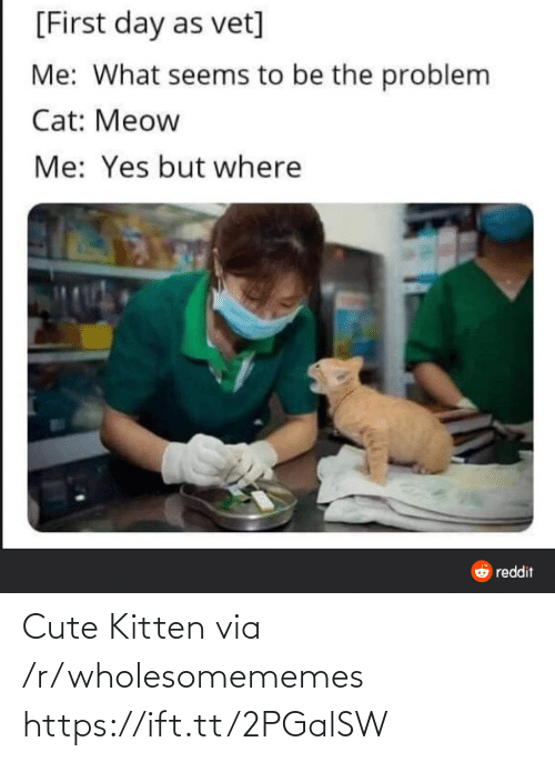 kitten: [First day as vet]  Me: What seems to be the problem  Cat: Meow  Me: Yes but where  O reddit Cute Kitten via /r/wholesomememes https://ift.tt/2PGalSW