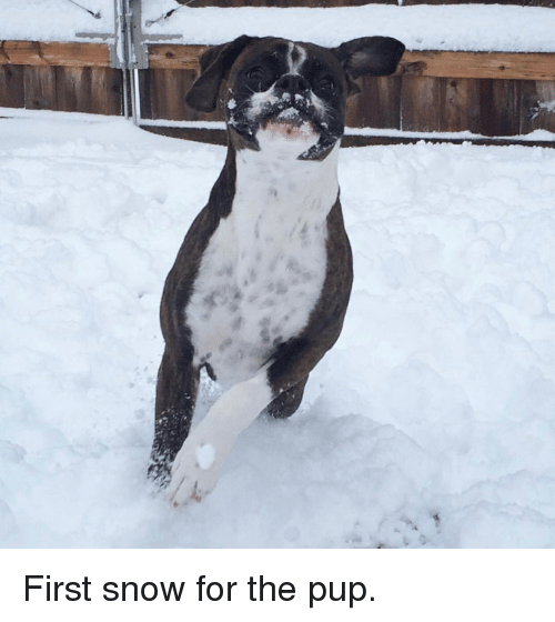 Snow, Time, and Pup: First snow for the pup.