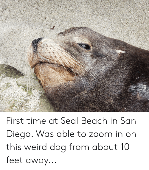 Weird, Zoom, and Beach: First time at Seal Beach in San Diego. Was able to zoom in on this weird dog from about 10 feet away...