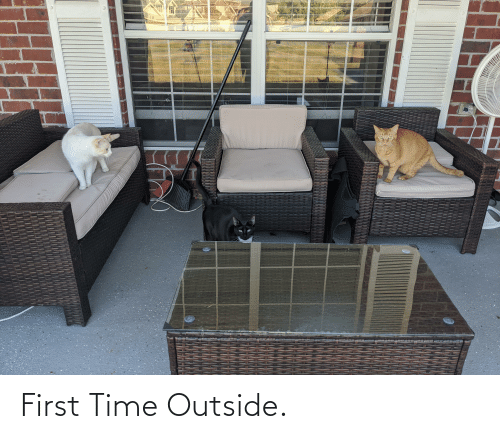 Aww Memes: First Time Outside.