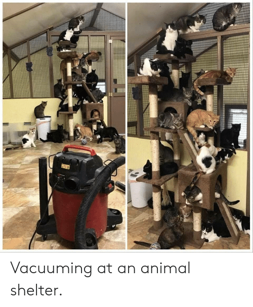 Animal, Animal Shelter, and Shelter: fitte Vacuuming at an animal shelter.