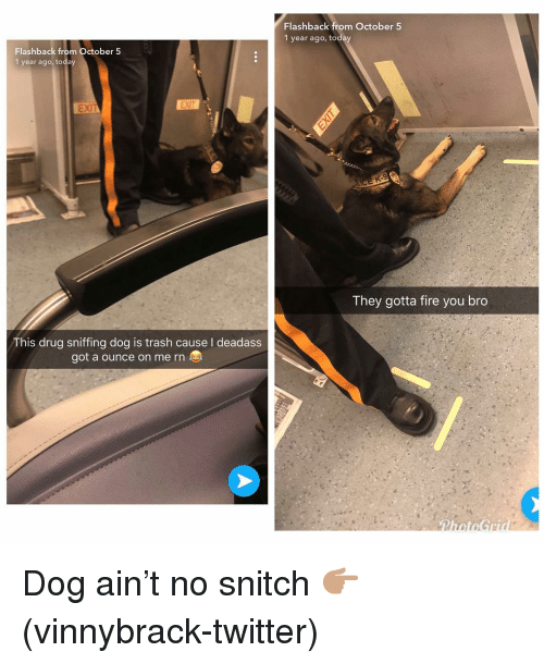 Fire, Funny, and Snitch: Flashback from October 5  1 year ago, today  Flashback from October 5  1 year ago, today  EXI  They gotta fire you bro  This drug sniffing dog is trash cause I deadass  got a ounce on me rn Dog ain't no snitch 👉🏽(vinnybrack-twitter)