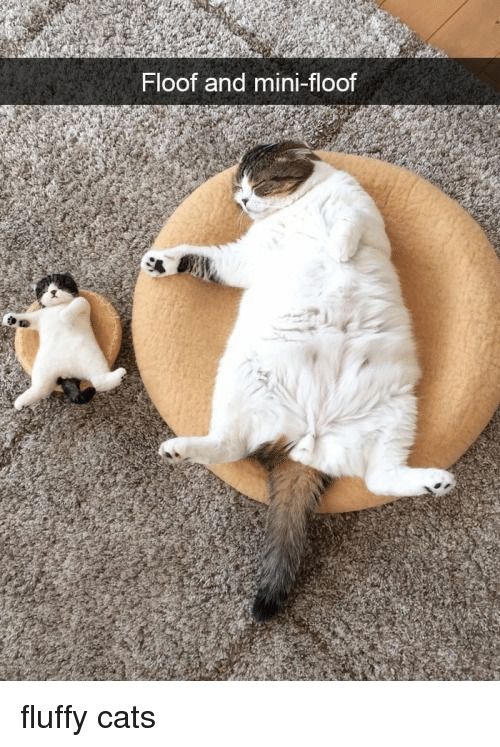 Cats, Mini, and Fluffy: Floof and mini-floof fluffy cats