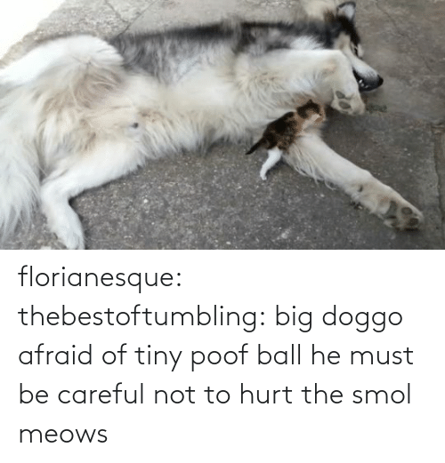 Meows: florianesque:  thebestoftumbling:  big doggo afraid of tiny poof ball    he must be careful not to hurt the smol meows
