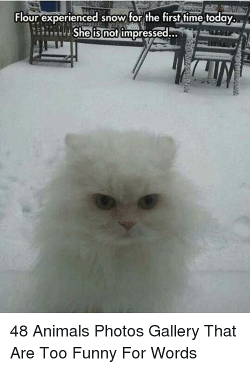 Animals, Funny, and Snow: Flour experienced snow for the first time today  eeShe is nof impressed... 48 Animals Photos Gallery That Are Too Funny For Words