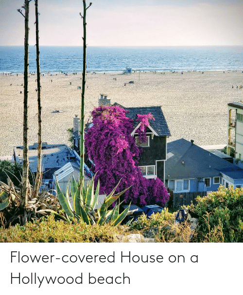 hollywood: Flower-covered House on a Hollywood beach