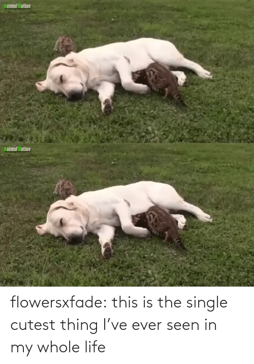 Single: flowersxfade: this is the single cutest thing I've ever seen in my whole life