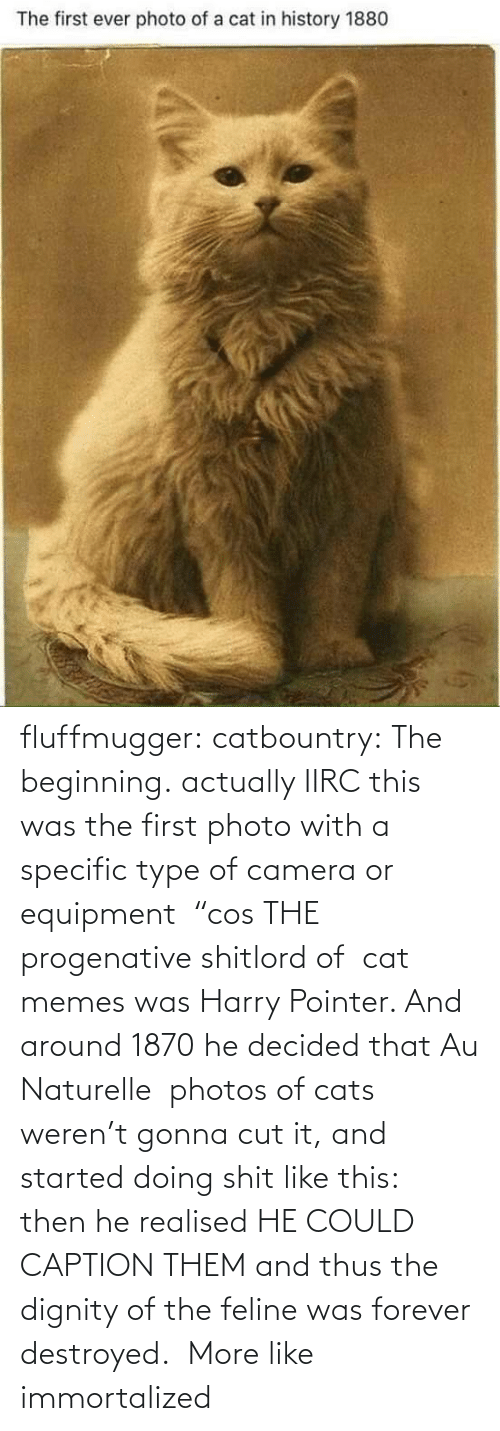 "thus: fluffmugger:  catbountry: The beginning. actually IIRC this was the first photo with a specific type of camera or equipment  ""cos THE progenative shitlord of  cat memes was Harry Pointer. And around 1870 he decided that Au Naturelle  photos of cats weren't gonna cut it, and started doing shit like this:  then he realised HE COULD CAPTION THEM and thus the dignity of the feline was forever destroyed.     More like immortalized"