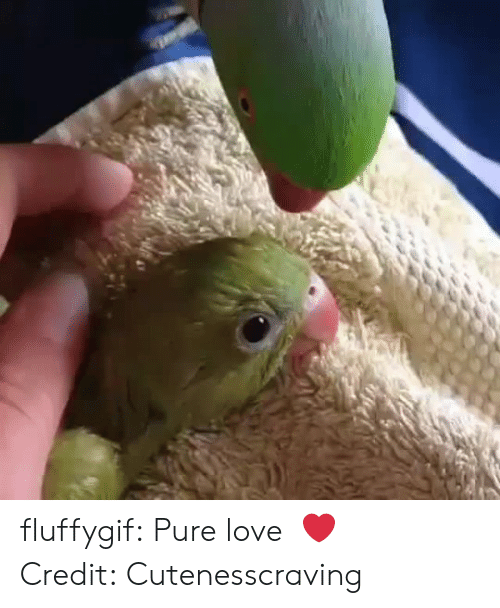 Instagram, Love, and Target: fluffygif:  Pure love ❤️   Credit:Cutenesscraving