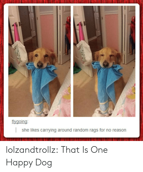 Tumblr, Blog, and Happy: flygoing  she likes carrying around random rags for no reason lolzandtrollz:  That Is One Happy Dog