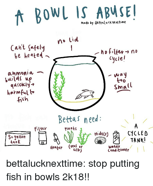 Tumblr, Blog, and Fish: fnade by gettalucknettime  no Lid  Cant safelvy  be heated  Cycle!  ammonia ︷  quickly'  harmful h  fish  t*  Small  Bettas need  filter  Plants  5+gallon  tank  CYCLED  (real or  water  Conditioner bettalucknexttime:  stop putting fish in bowls 2k18!!