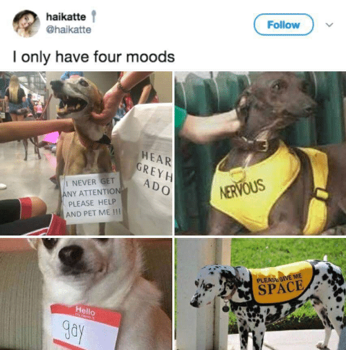 Give Me Space: Follow  haikatte  @haikatte  I only have four moods  HEAR  GREY H  I NEVER GET  ANY ATTENTION  PLEASE HELP  AND PET ME !!!  ADO  NERVOUS  PLEASE GIVE ME  SPACE  Hello  y nane is  gay