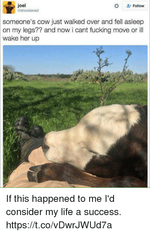 Cowe: . Follow  joel  someone's cow just walked over and fell asleep  on my legs?? and now i cant fucking move or ill  wake her up If this happened to me I'd consider my life a success. https://t.co/vDwrJWUd7a