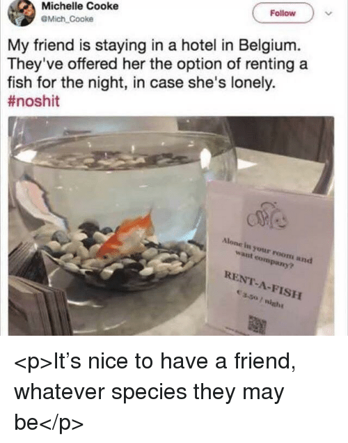renting: Follow  Michelle Cooke  @Mich Cooke  My friend is staying in a hotel in Belgium.  They've offered her the option of renting a  fish for the night, in case she's lonely.  #noshit  Alone in your room and  want company?  RENT-A-FISH <p>It's nice to have a friend, whatever species they may be</p>