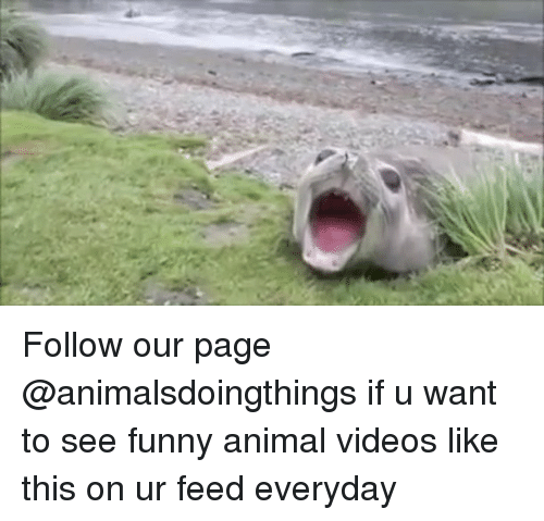 Animal Videos: Follow our page @animalsdoingthings if u want to see funny animal videos like this on ur feed everyday