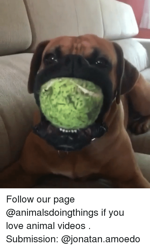 Animal Videos: Follow our page @animalsdoingthings if you love animal videos . Submission: @jonatan.amoedo