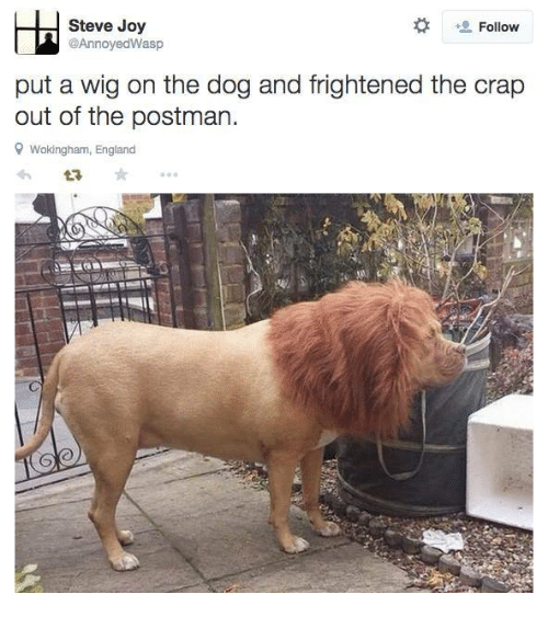 England, Joy, and Dog: Follow  Steve Joy  @AnnoyedWasp  put a wig on the dog and frightened the crap  out of the postman.  9 Wokingham, England