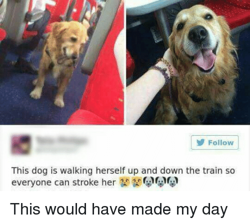 Train, Stroke, and Dog: Follow  This dog is walking herself up and down the train so  everyone can stroke he This would have made my day