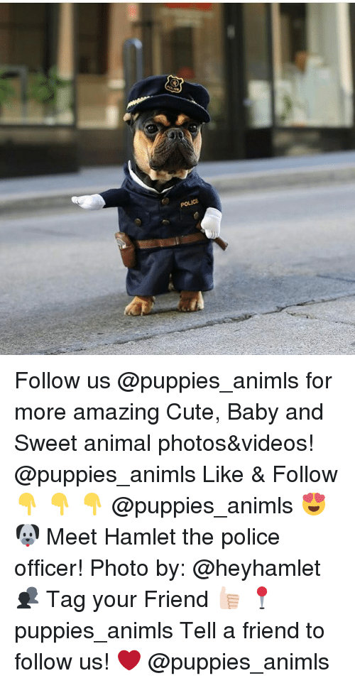 Hamlet, Memes, and Police: Follow us @puppies_animls for more amazing Cute, Baby and Sweet animal photos&videos! @puppies_animls Like & Follow 👇 👇 👇 @puppies_animls 😍 🐶 Meet Hamlet the police officer! Photo by: @heyhamlet 👥 Tag your Friend 👍🏻 📍 puppies_animls Tell a friend to follow us! ❤ @puppies_animls