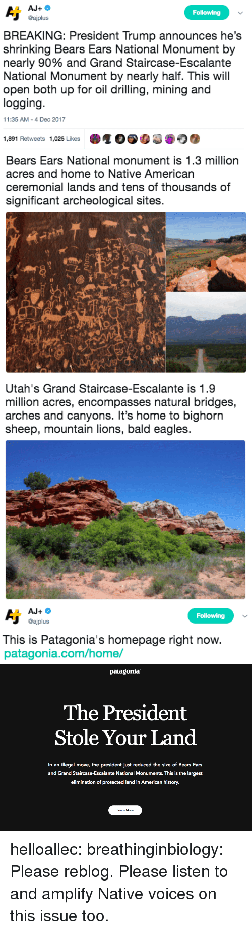 drilling: Following  @ajplus  BREAKING: President Trump announces he's  shrinking Bears Ears National Monument by  nearly 90% and Grand Staircase-Escalante  National Monument by nearly half. This will  open both up for oil drilling, mining and  logging  11:35 AM-4 Dec 2017  1,891 Retweets 1,025 Likes   Bears Ears National monument is 1.3 million  acres and home to Native American  ceremonial lands and tens of thousands of  significant archeological sites.  sh   Utah's Grand Staircase-Escalante is 1.9  million acres, encompasses natural bridges,  arches and canyons. It's home to bighorn  sheep, mountain lions, bald eagles   Following  @ajplus  This is Patagonia's homepage right now  patagonia.com/home/   patagonia  The President  Stole Your Land  In an illegal move, the president just reduced the size of Bears Ears  and Grand Staircase-Escalante National Monuments. This is the largest  elimination of protected land in American history.  Learn More helloallec: breathinginbiology: Please reblog.  Please listen to and amplify Native voices on this issue too.