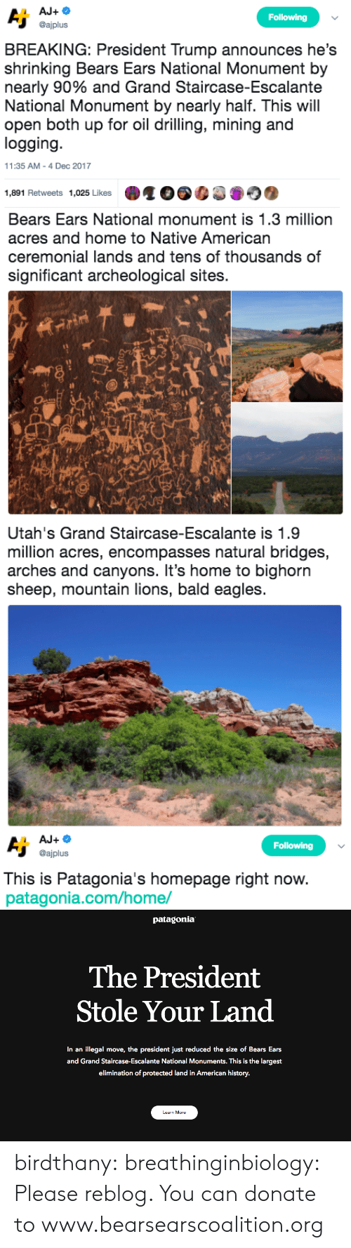 drilling: Following  @ajplus  BREAKING: President Trump announces he's  shrinking Bears Ears National Monument by  nearly 90% and Grand Staircase-Escalante  National Monument by nearly half. This will  open both up for oil drilling, mining and  logging  11:35 AM-4 Dec 2017  1,891 Retweets 1,025 Likes   Bears Ears National monument is 1.3 million  acres and home to Native American  ceremonial lands and tens of thousands of  significant archeological sites.  sh   Utah's Grand Staircase-Escalante is 1.9  million acres, encompasses natural bridges,  arches and canyons. It's home to bighorn  sheep, mountain lions, bald eagles   Following  @ajplus  This is Patagonia's homepage right now  patagonia.com/home/   patagonia  The President  Stole Your Land  In an illegal move, the president just reduced the size of Bears Ears  and Grand Staircase-Escalante National Monuments. This is the largest  elimination of protected land in American history.  Learn More birdthany: breathinginbiology: Please reblog.  You can donate to www.bearsearscoalition.org
