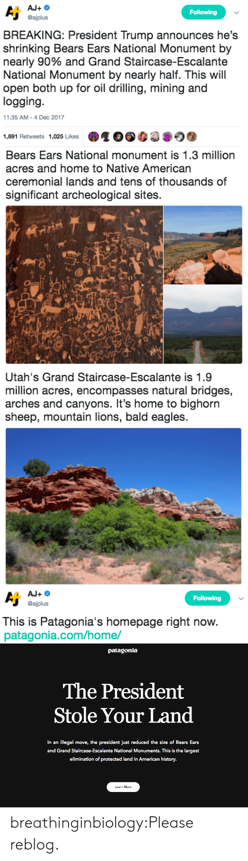 drilling: Following  @ajplus  BREAKING: President Trump announces he's  shrinking Bears Ears National Monument by  nearly 90% and Grand Staircase-Escalante  National Monument by nearly half. This will  open both up for oil drilling, mining and  logging  11:35 AM-4 Dec 2017  1,891 Retweets 1,025 Likes   Bears Ears National monument is 1.3 million  acres and home to Native American  ceremonial lands and tens of thousands of  significant archeological sites.  sh   Utah's Grand Staircase-Escalante is 1.9  million acres, encompasses natural bridges,  arches and canyons. It's home to bighorn  sheep, mountain lions, bald eagles   Following  @ajplus  This is Patagonia's homepage right now  patagonia.com/home/   patagonia  The President  Stole Your Land  In an illegal move, the president just reduced the size of Bears Ears  and Grand Staircase-Escalante National Monuments. This is the largest  elimination of protected land in American history.  Learn More breathinginbiology:Please reblog.