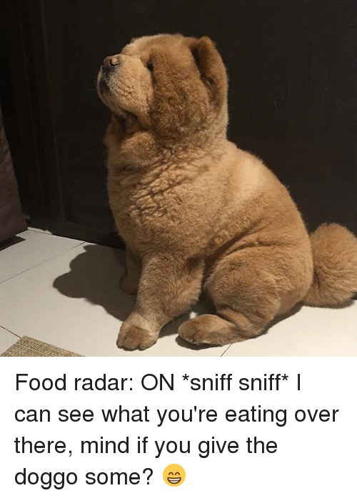 sniff sniff: Food radar: ON *sniff sniff* I can see what you're eating over there, mind if you give the doggo some? 😁