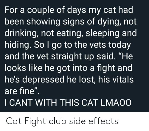 "cat fight: For a couple of days my cat had  been showing signs of dying, not  drinking, not eating, sleeping and  hiding. So I go to the vets today  and the vet straight up said. ""He  looks like he got into a fight and  he's depressed he lost, his vitals  are fine"".  I CANT WITH THIS CAT LMA00 Cat Fight club side effects"